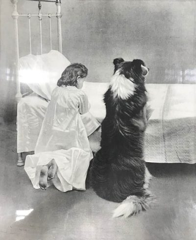 Little girl and her collie praying at bedtime.