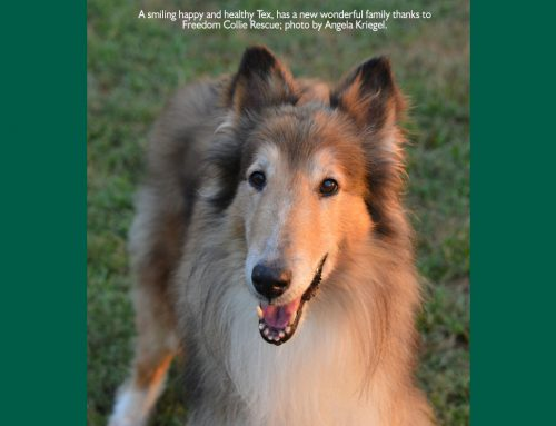 Collie Rescue News