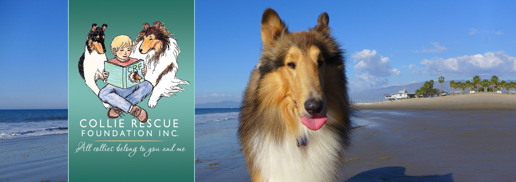 Example of a rescued sable rough collie for sliders.