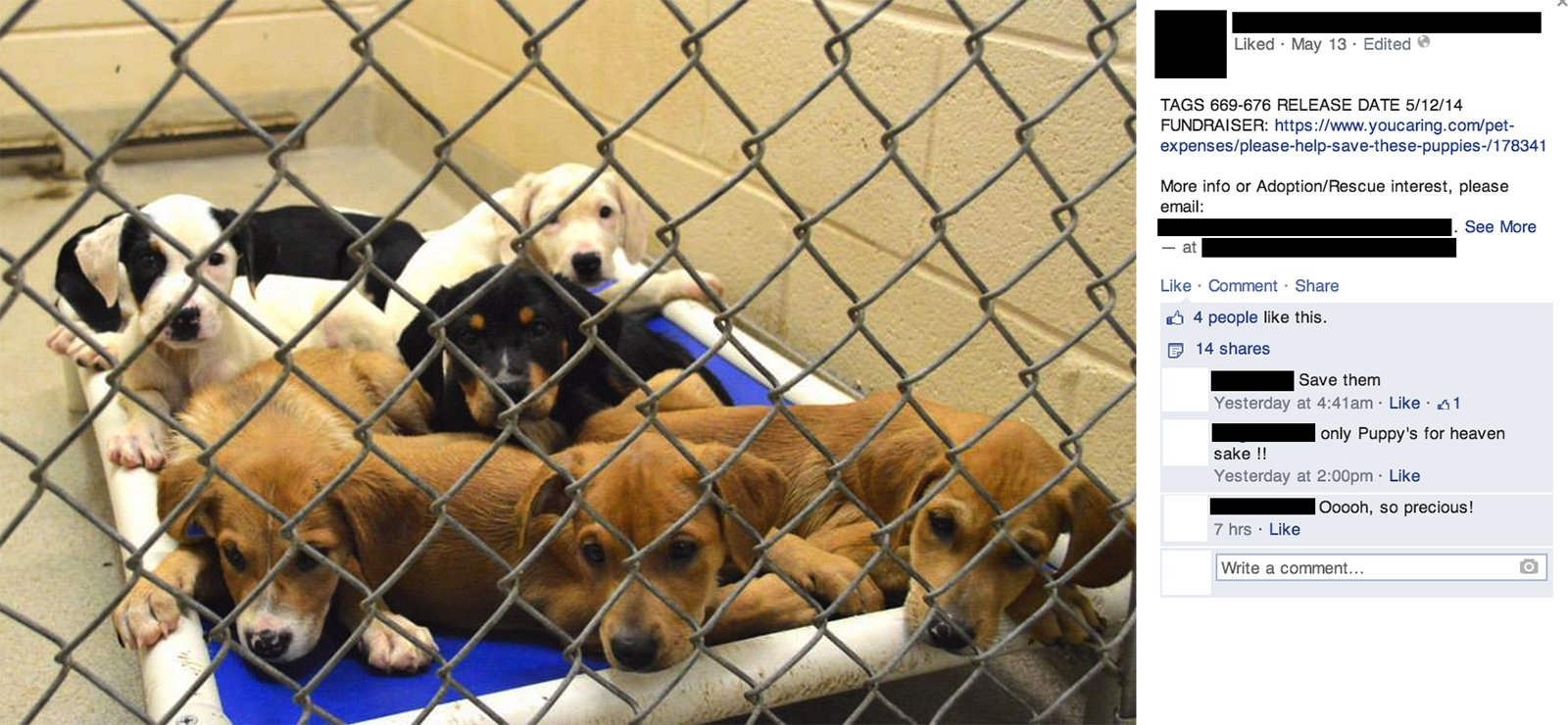 The Love/Hate Relationship of Social Media and Rescue showing puppies in a pound.